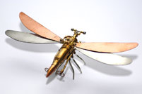 mechanisoptera percutio